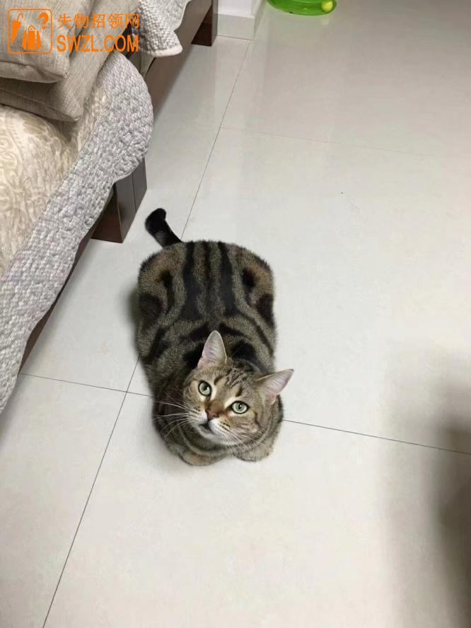 寻物启事: 猫