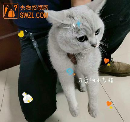 失物招领:灰色猫咪失物招领