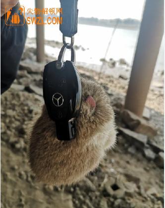 失物招领:奔驰钥匙失物招领