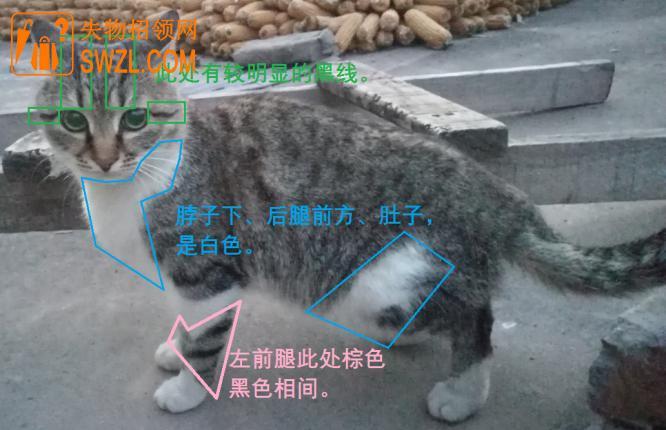 寻物启事: 寻找黑狸猫(留固第二寨村)