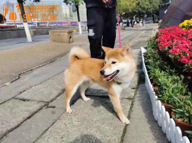 寻物启事: 寻狗