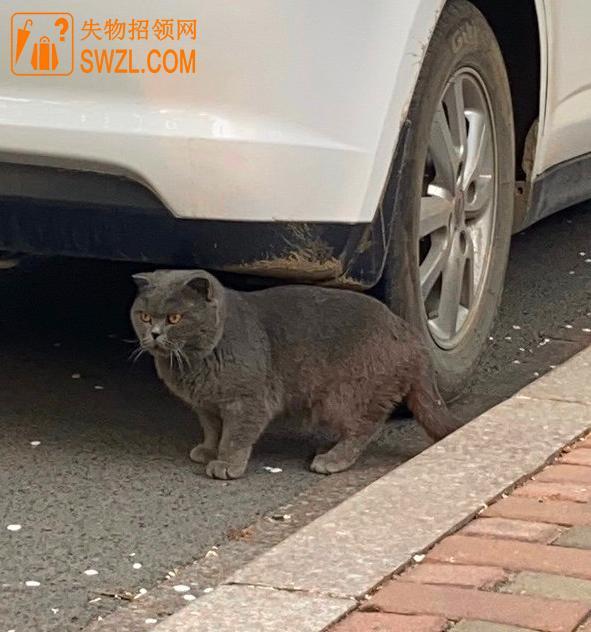 失物招领:猫咪失物招领